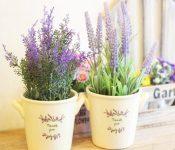 Top 5 cây trồng trang trí nội thất phòng ngủ