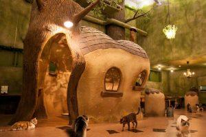 Thiết kế nội thất quán cafe thú cưng độc đáo, thu hút người nhìn.