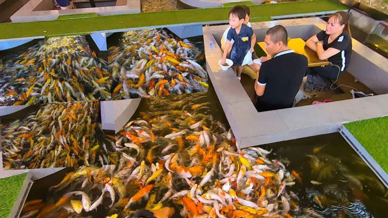 mô hình quán cafe cá koi 1