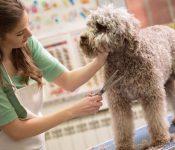 Ý tưởng kinh doanh cửa hàng chăm sóc thú cưng