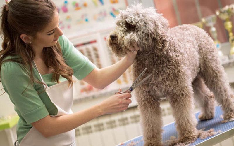 cửa hàng chăm sóc thú cưng dịch vụ